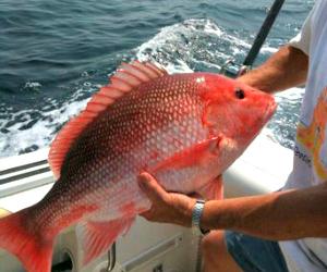 Fishing charter boats in the Gulf Coast