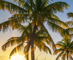 Palm trees thrive in mild Gulf Shores weather