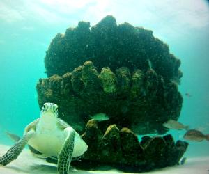 Navarre Marine Sanctuary Diving Reefs