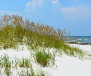 Cape San Blas sand dunes on Florida's Forgotten Coast