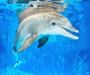 dolphin from the Clearwater Marine Aquarium